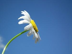 flower-204857_1280