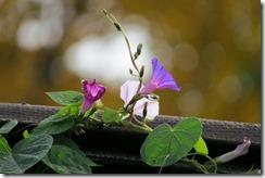 flower-207590_1280