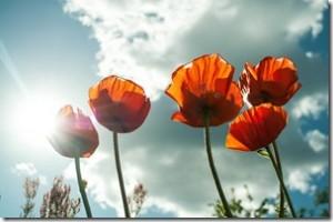 flower-399409_1280_thumb.jpg