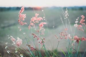 flowers-690425_1280.jpg