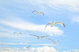 gulls-833515_1280