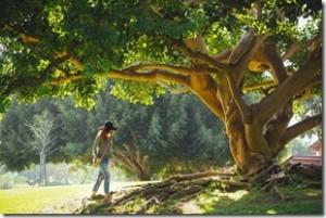 tree-690363_1280_thumb.jpg