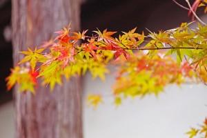 fall-249558_640