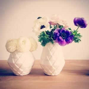 flowers-711173_640