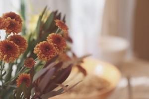 flowers-726438_640