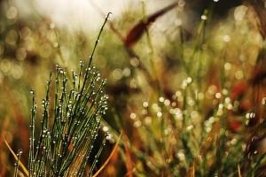 grass-507566_640
