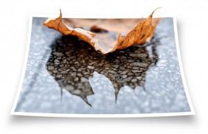 leaf-100497_640