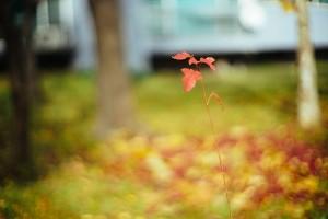 leaves-733190_640