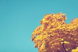 autumn-691679_640