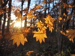 autumnal-leaves-978740_640