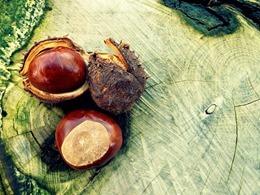 chestnut-472237_640