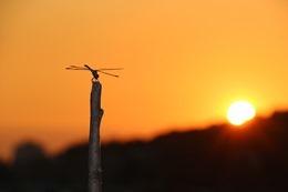 dragonfly-531586_640