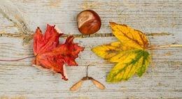 fall-970336_640