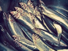 fish-448556_640