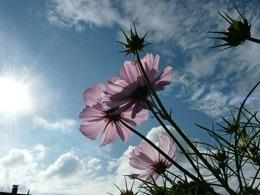 flower-61324_1920
