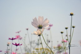 flowers-1543265_640