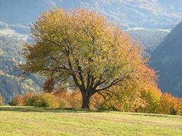 golden-autumn-834119_640