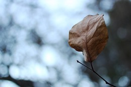 leaf-801246_640