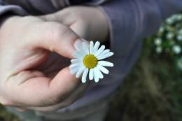 flower-1041044_640