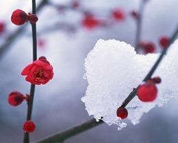 winter-726919_640