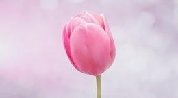flower-821788_640.jpg