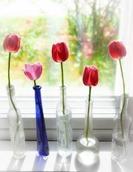 spring-645328_640