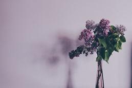 flower-731480_640.jpg