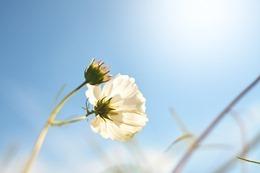 spring-1229948_640