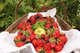 strawberries-552238_640