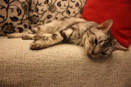 cat-682009_640
