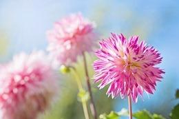 flower-1298205_640