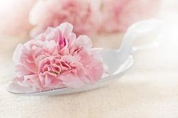 flower-1357109_640