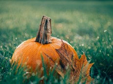 pumpkin-1030817_640