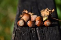 nuts-1694911_640